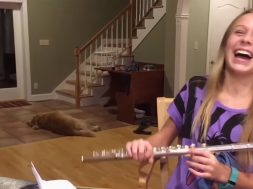 feature-unimpressed-dog-flute