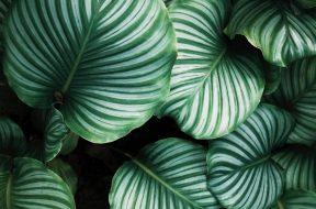 plant-2.jpg