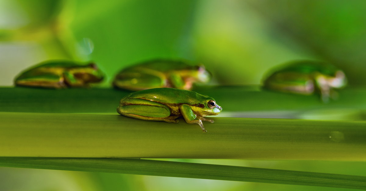 Asking for God's Help – Don't Let the Frogs Pile Up